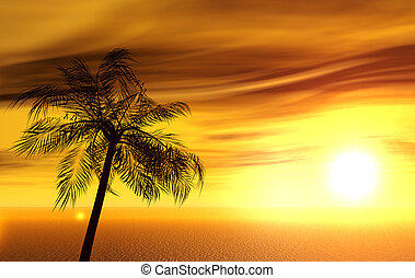 single palm on the uninhabited island on sunset of a sun