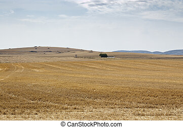 Stubble field in an agricultural landscape in Ciudad Real...