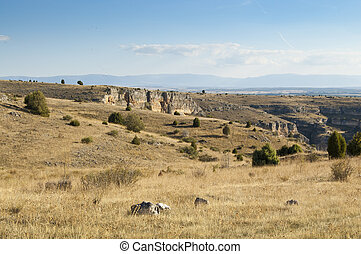 Steppe on the moors of the Hoces del Rio Duraton Natural...