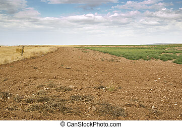 Fallow field in an agricultural landscape in Ciudad Real...