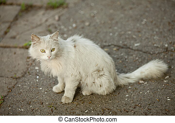 White street cat at oudoor.