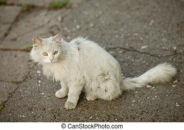 blanco, calle, gato, Oudoor