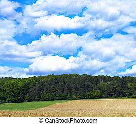 Natural landscape with green forest and blue sky
