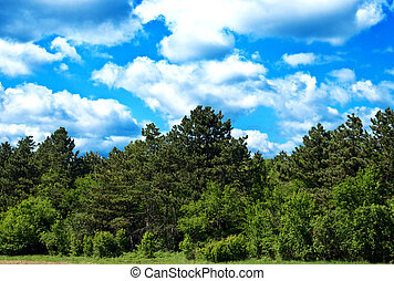 Green forest and bright blue sky