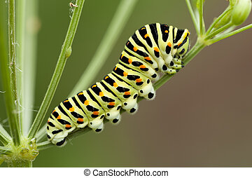 caterpillar - yellow spotted caterpillar sit on plant