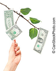 Money growing from tree - Hand pulling dollar notes off a...
