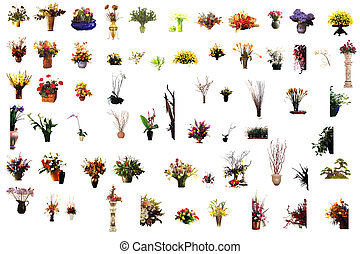 collection of flower houseplants in flower pot, isolated on...