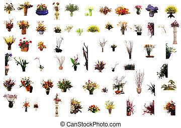 Colección, flor, houseplants