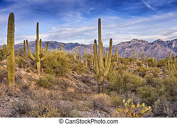 Desert Scene in Tucson Arizona - Desert Landscape at Sabino...