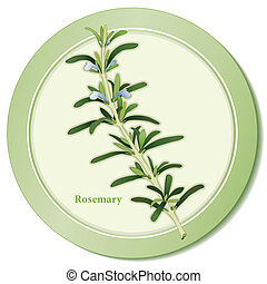 Rosemary Herb Icon - Rosemary icon, blue flowers, fragrant...