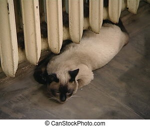 cat lay block radiator - cat lay and warm under old cast...