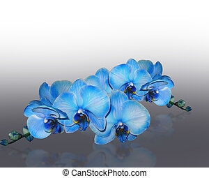 Blue orchids - Image and illustration composition of Image...