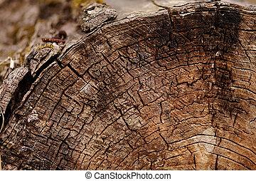 corte, árvore, tronco
