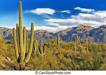 Tucson Arizona Desert View - Tucson Arizona View of Catalina...