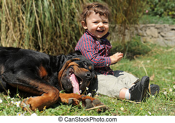 rottweiler and child - portrait of a purebred rottweiler and...