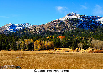 Fall Season In The Sierras - An early snowfall covers the...
