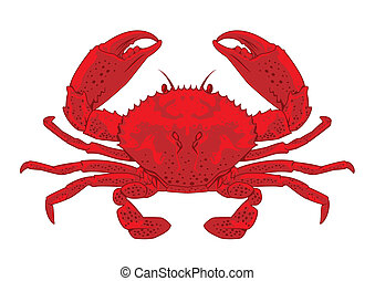 Red crab - Highly detailed vector crab, ideal for seafood...