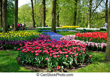 Purple, yellow, blue, pink and white tulips in Keukenhof...