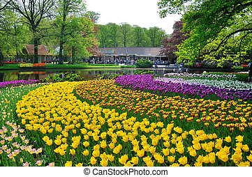 Pink, yellow, purple and white tulips in Keukenhof park in...