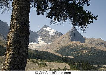 Canadian Rockies, Sunwapta Pass