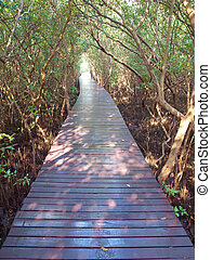 Underpass of trees - Boardwalk underpass of trees to the...