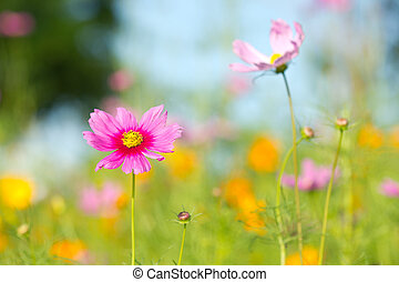 pink daisies in grass field with background