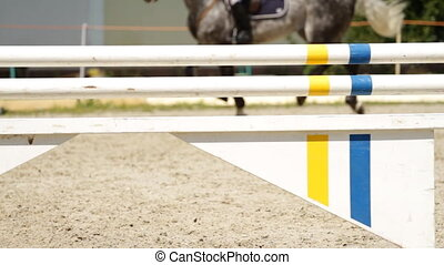 Horse show jumping - equestrian show jumping