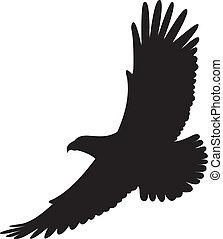 águia, vetorial