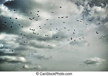 migrants - flock of migratory birds in moody sky