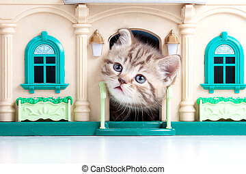 cute kitten looking out toy house