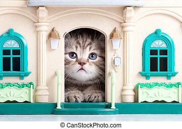 pequeno, gatinho, sentando, brinquedo, casa