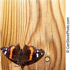 Red Admiral Butterfly on fence