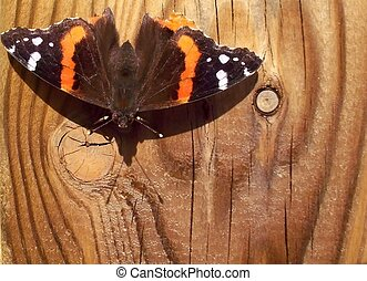 Red Admiral Butterfly on wood