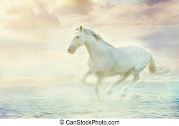 fantasy white horse - white running horse, sky fantasy...