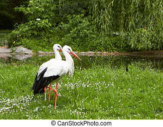 White stork on green field