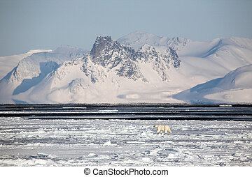 Arctic winter landscape, polar bear - Arctic landscape with...