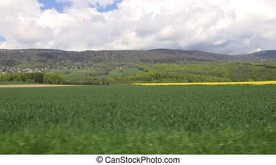 Country Drive- canola field - driving scenes from the...