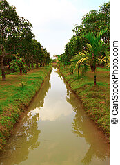 Ditch - Rural landscape with ditch and mango trees.