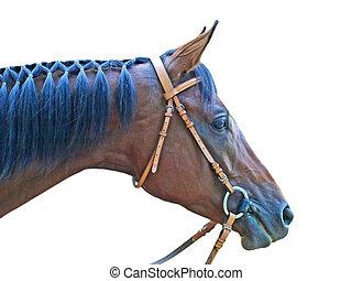 Head of brown horse. - Head of brown horse taken closeup on...