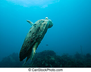Injured loggerhead sea turtle swimming on reef - LITTLE CORN...