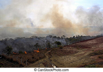 Burning forest -  a forest is burning in brazil