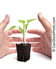 Environmental protection - Two hands protect one young plant...