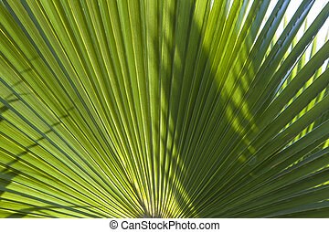 structure of palm tree in morning sun - structure of palm...