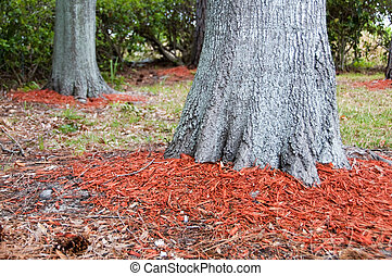 Redwood mulch ring - Redwood mulch around the base of Oak...
