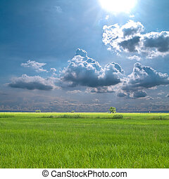 Rice field with beautiful sky and sunlight
