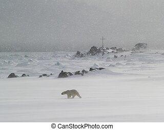Polar bear in the snow blizzard