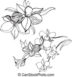 Floral design elements - Set of floral design elements -...