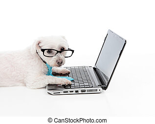 Business or Educated dog using compuer - A business,...