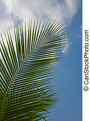palm trees against the blue sky - The palm trees against the...