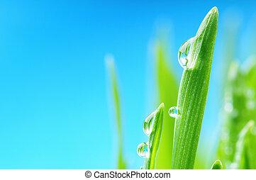 Fresh wet grass after the rain. Macro